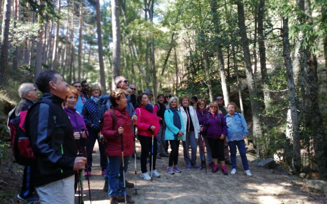 Grupo Senior Ayuntamiento de Las Rozas