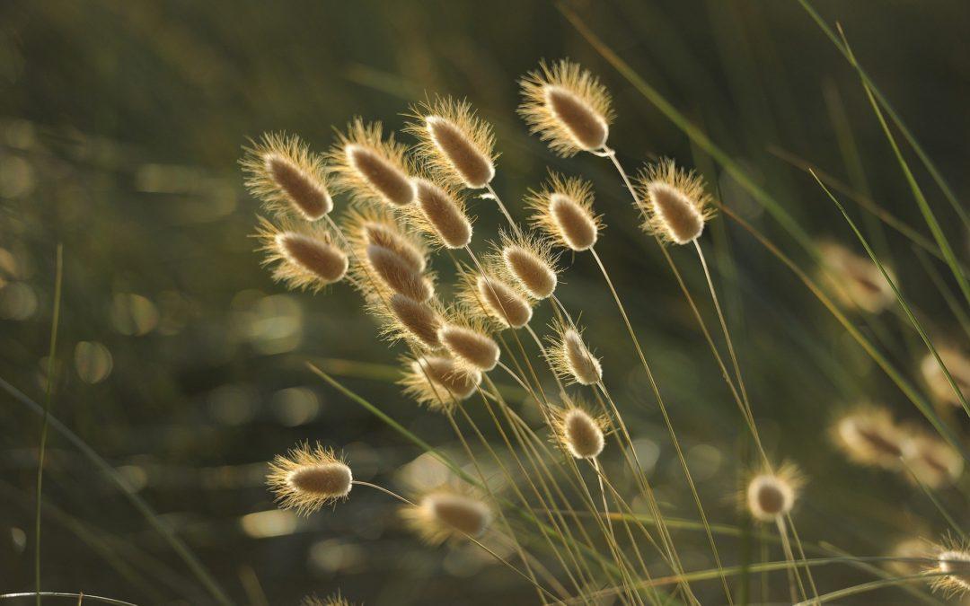 Reflexiones en la Naturaleza. Un lienzo en blanco