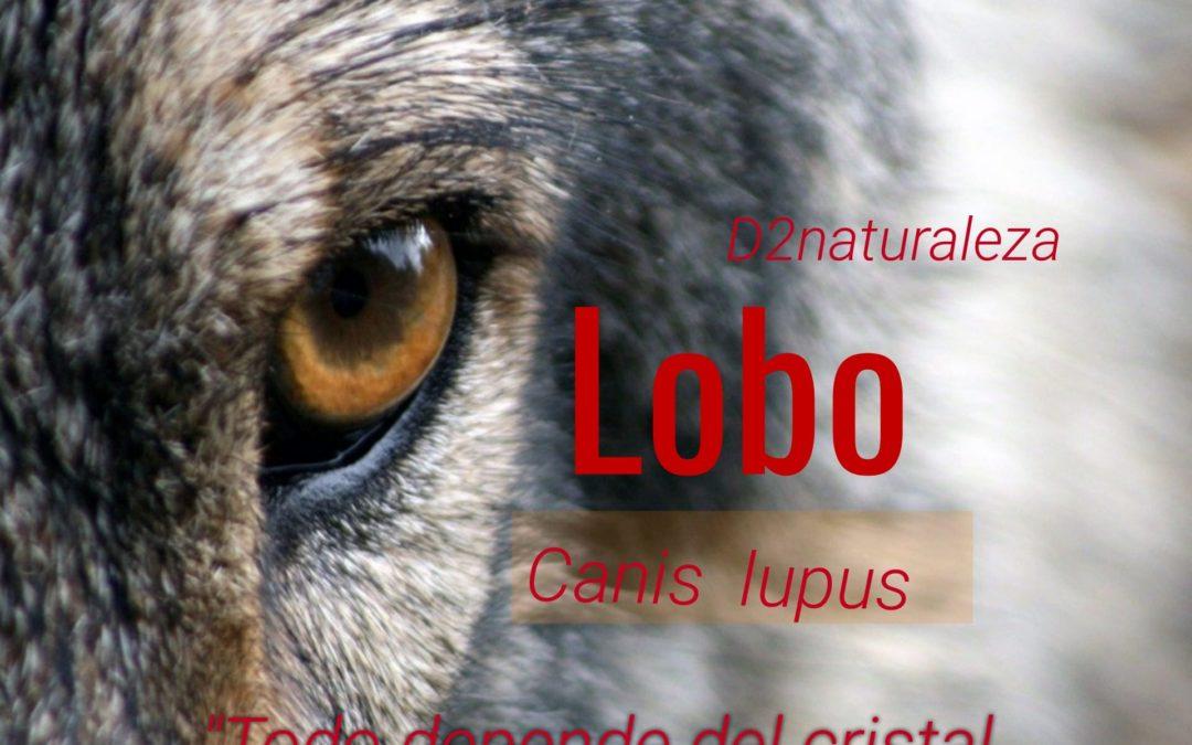 El Lobo. Todo depende del cristal con el que se mira