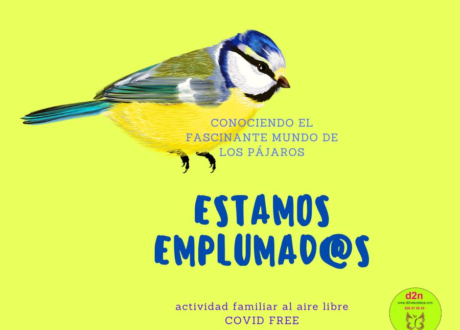 Aprende a reconocer a las aves. Salida ornitológica. Alpedrete