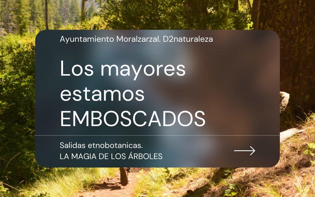 La magia de los Árboles. Ayuntamiento Moralzarzal